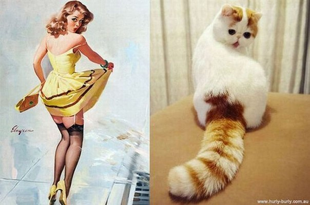 cats-as-pin-up-girls-5