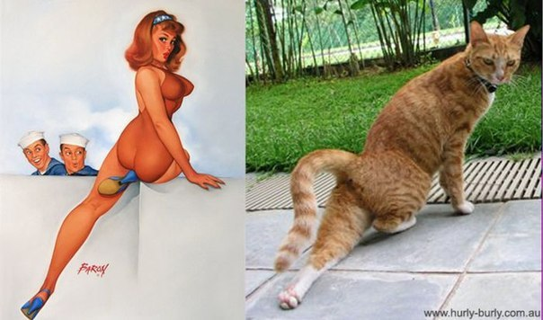 cats-as-pin-up-girls-6