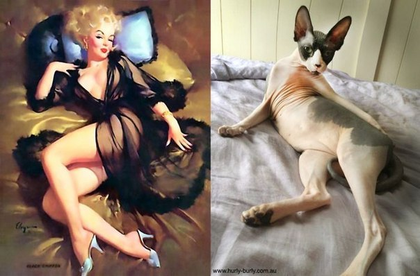 cats-as-pin-up-girls-9