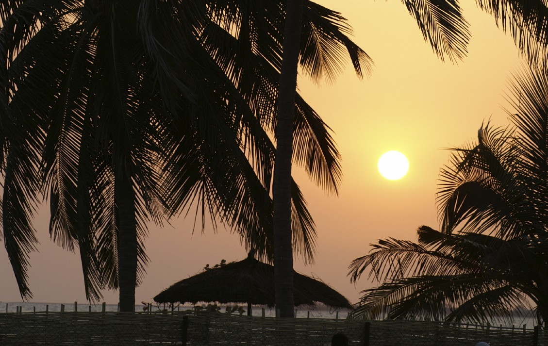 Silhouette palm trees in Gambia with a sunrise in the background