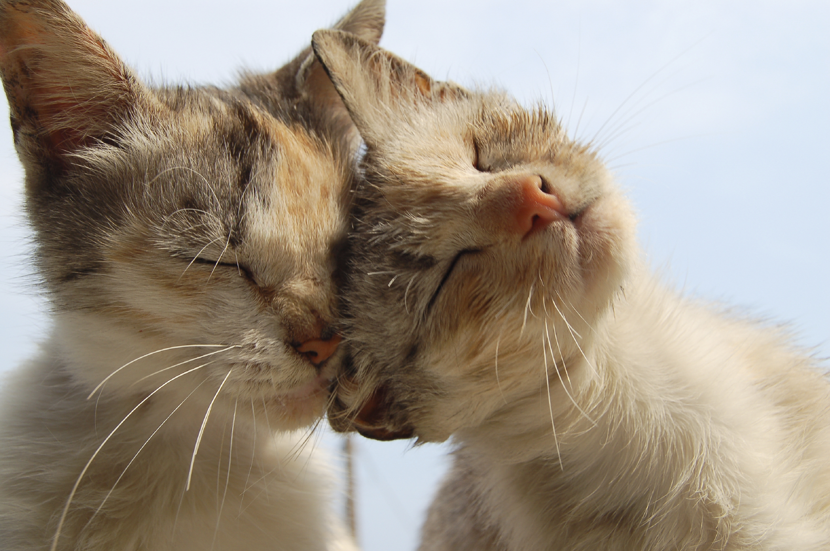 love and tenderness of cats