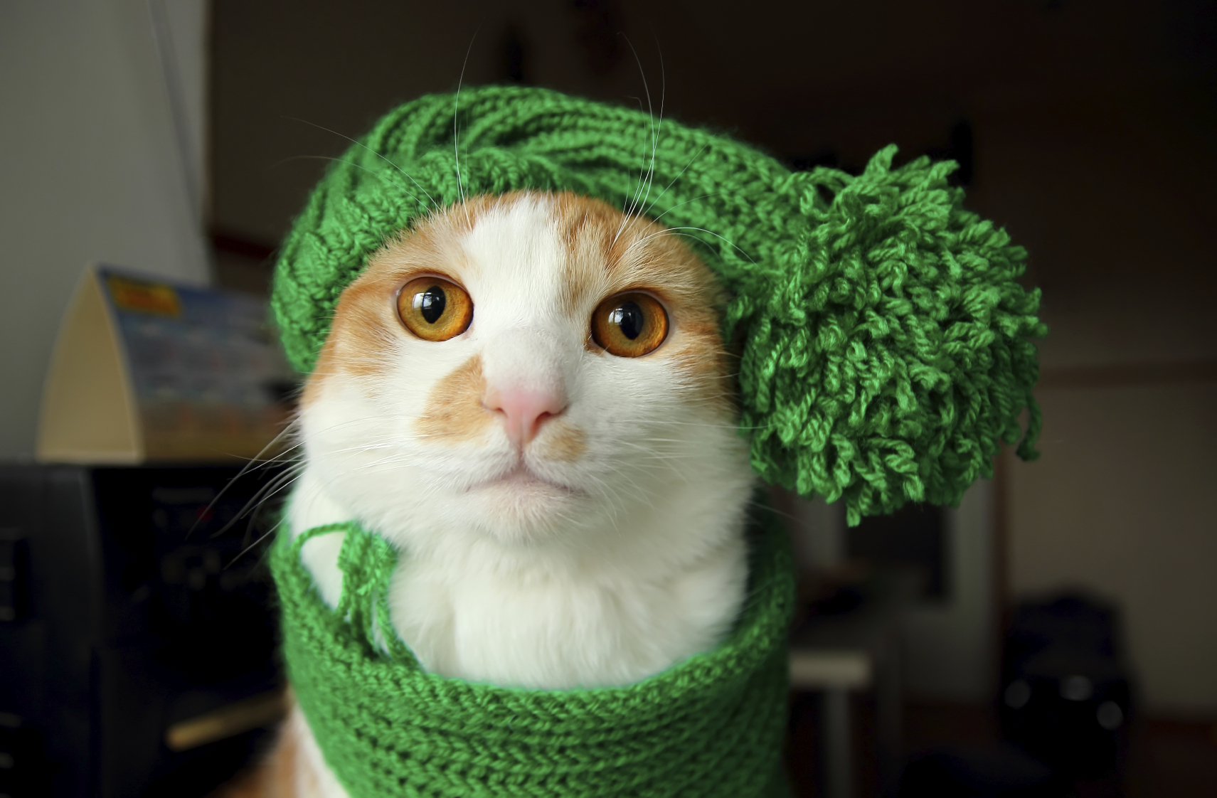 Puss in green hat with pompons