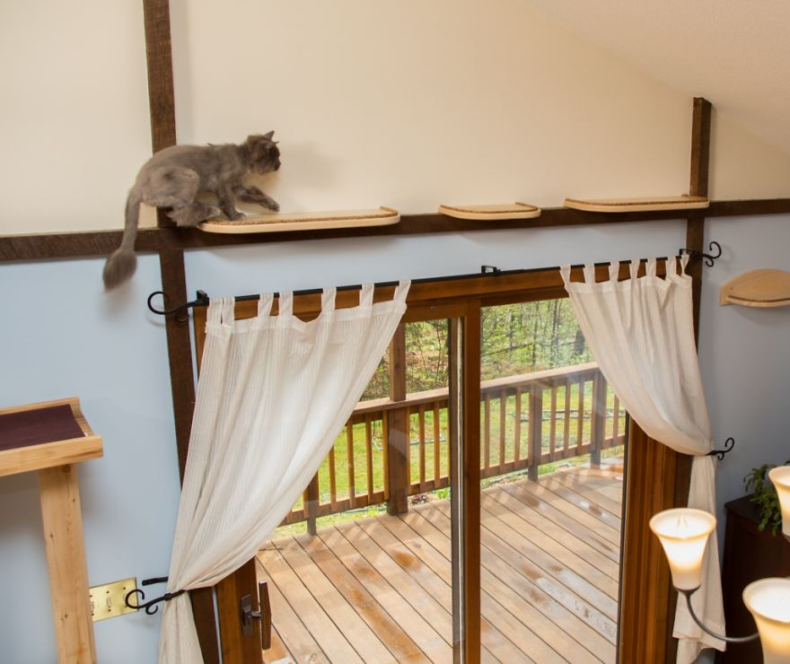 Massachusetts-Home-Transformed-into-Cats-Paradise-570538395a562__880