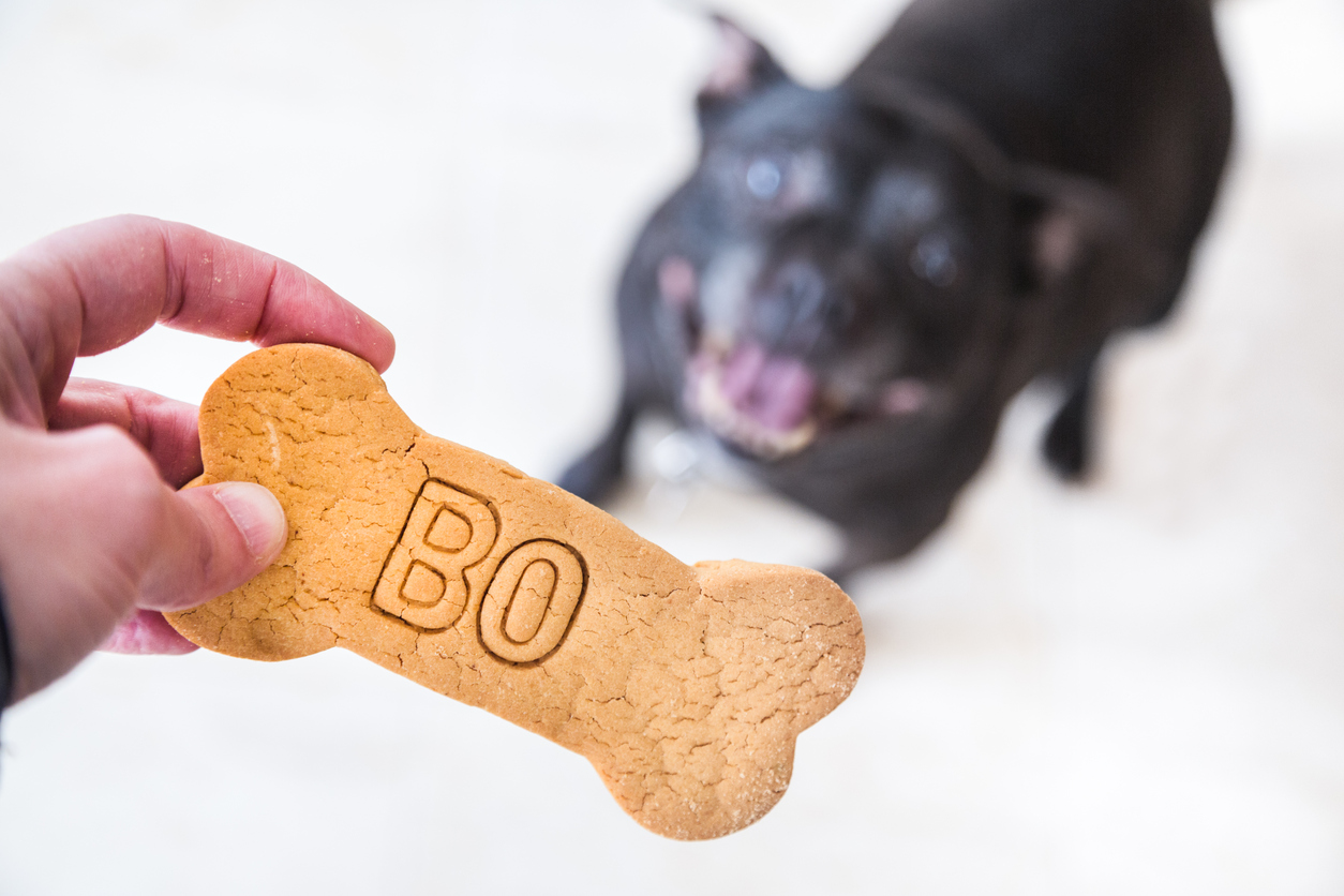 Dog and biscuit